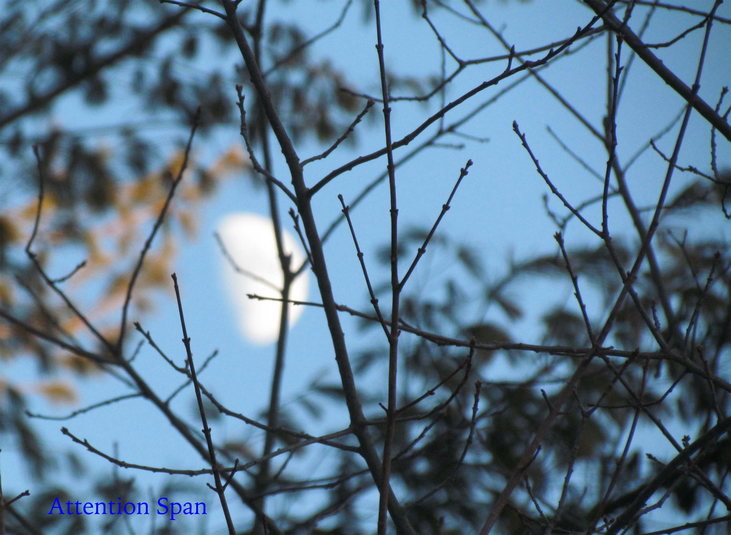 late afternoon moon behind branches